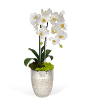 Load image into Gallery viewer, Double Orchid In Silver Glass Container