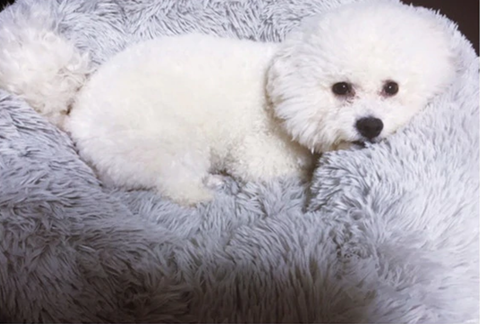 maltese dog bed