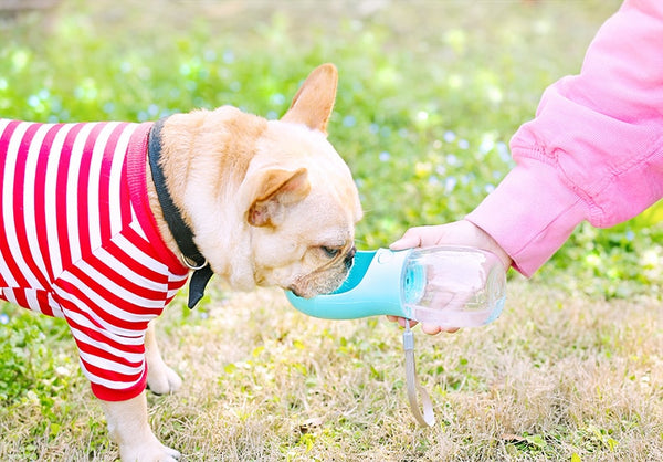 Dispensable Water Bottle for Pets