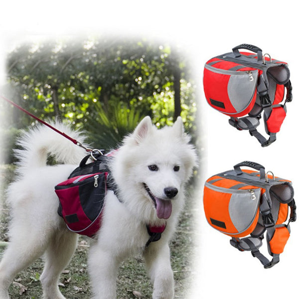 Dog Wearing Saddle Bag