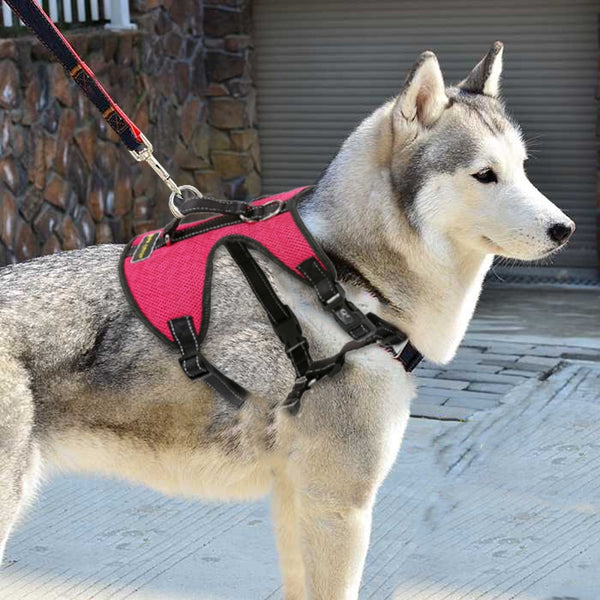 Color Dog Harness