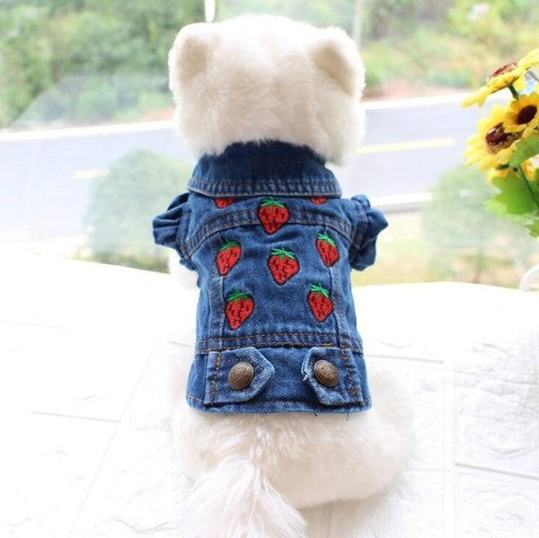 Jeans For Your Pet