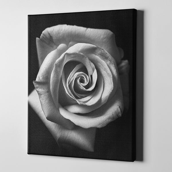 Contemporary high end canvas print black and white rose canvasheaven mightylinksfo