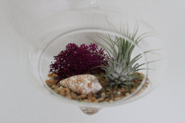 Ornament Hanging Air Plant Terrarium - I