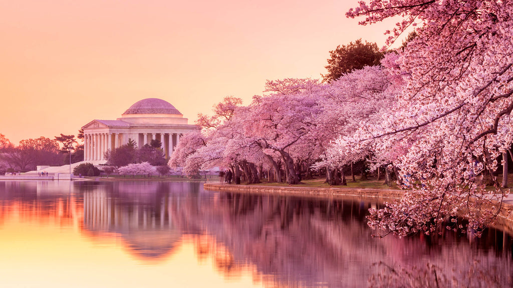The Best U.S. Cities to See Cherry Blossoms