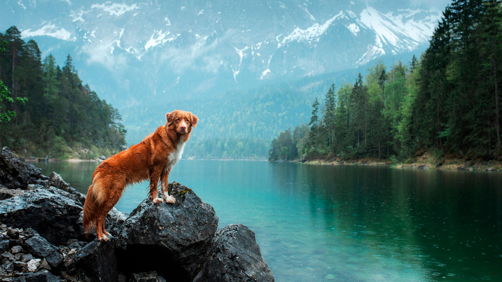 7 Perfectly Pet-Friendly Cities in the U.S.