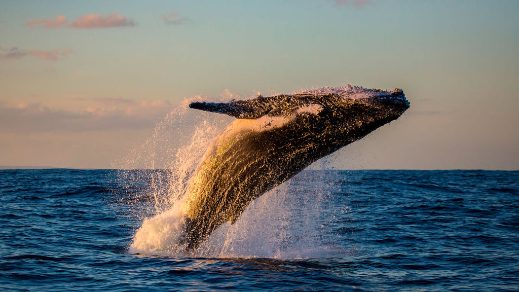 The World's Best Places For Whale Watching