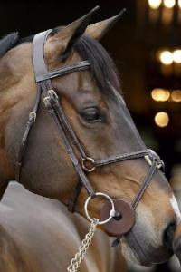 Dy'on Figure Eight Jumper Bridle - Malvern Saddlery