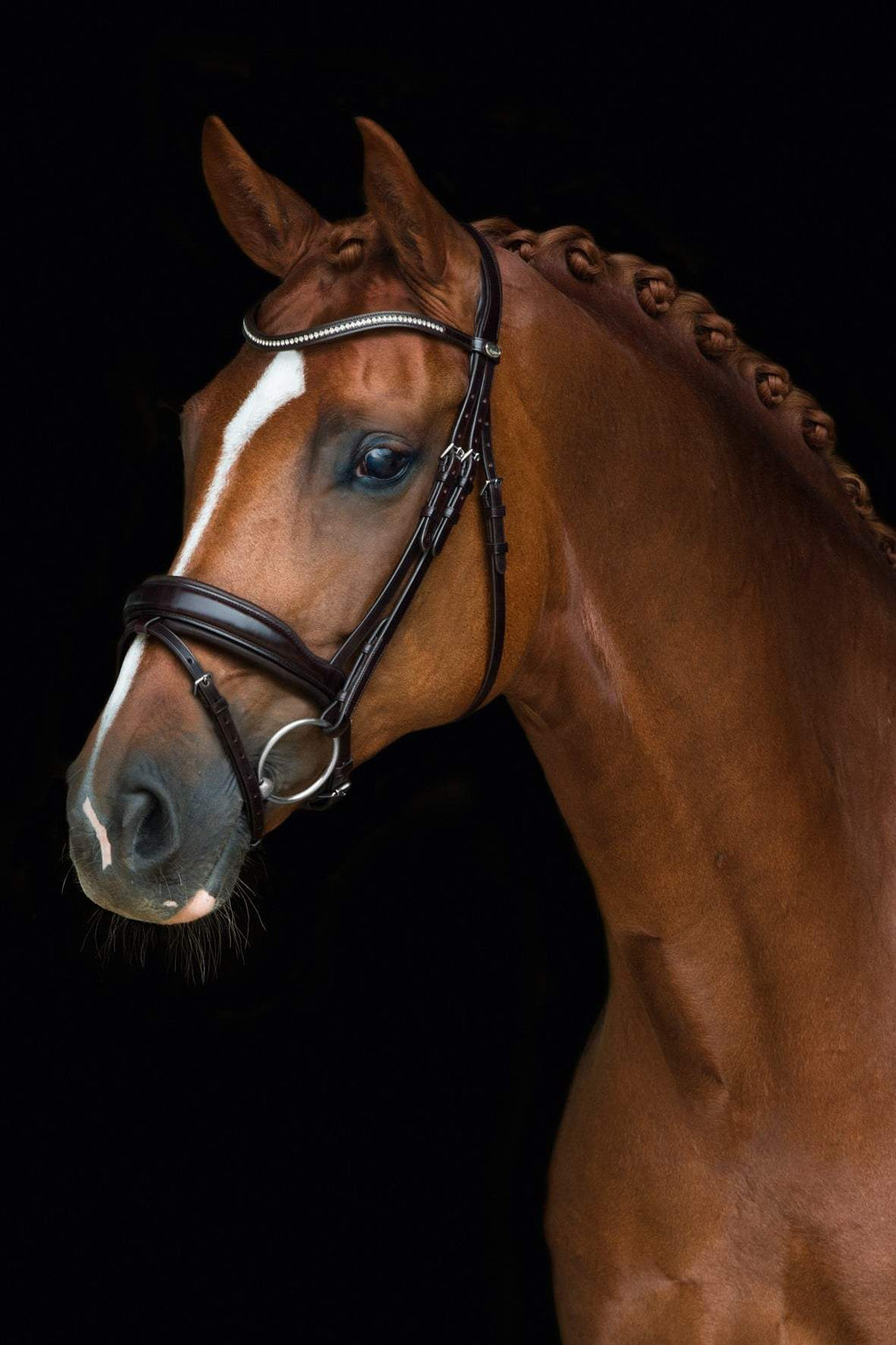 Shop Schockemohle Stanford Dressage Bridle | Shop Schockemohle Sports Brand Products – Malvern Saddlery. - Malvern Saddlery