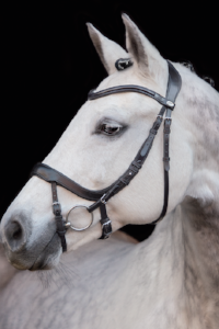 Shop Schockemohle Equitus Alpha Jumper/Dressage Bridle  | Shop Schockemohle Sports Brand Products – Malvern Saddlery. - Malvern Saddlery