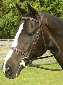 Sovereign Hunter Bridle - Malvern Saddlery