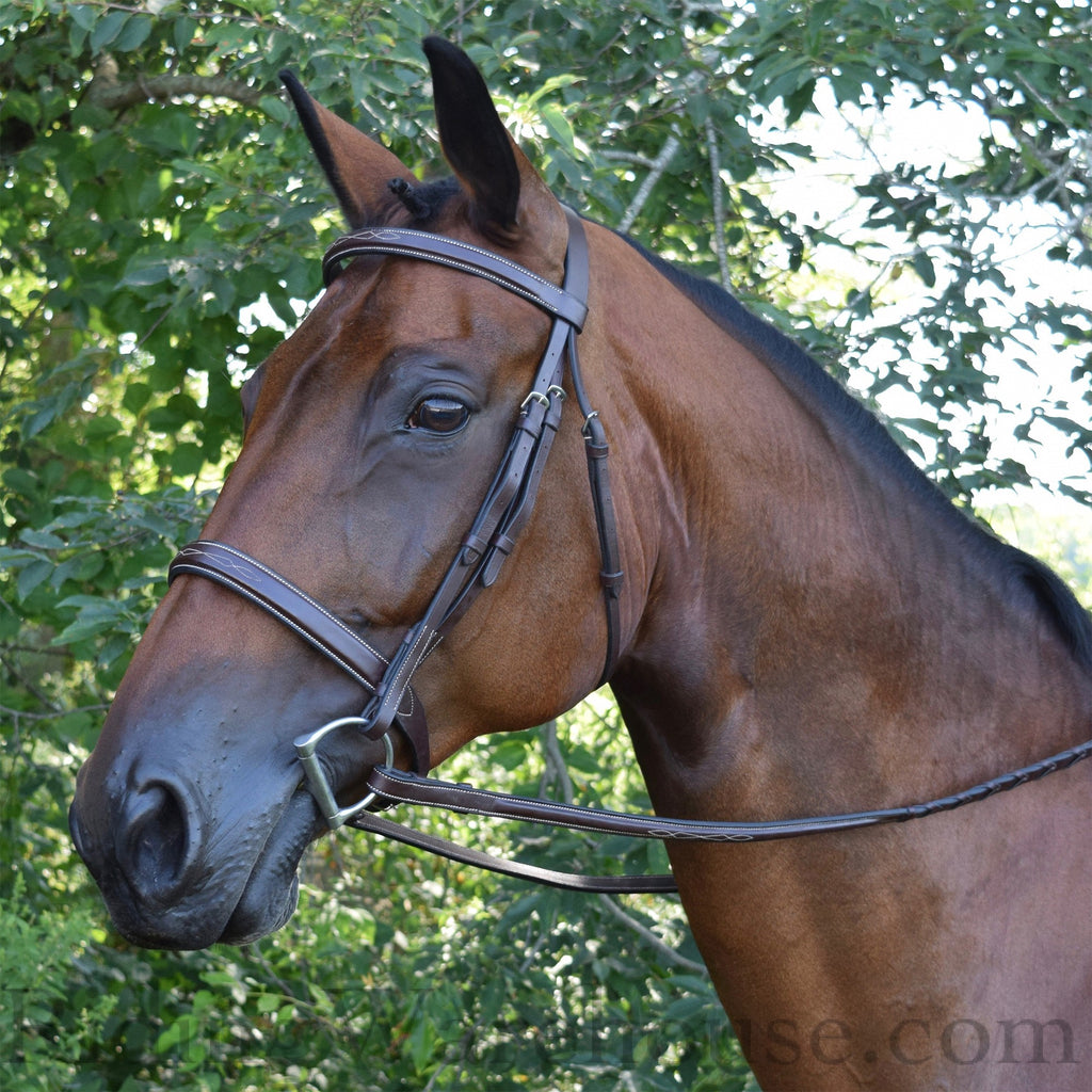 Shop Black Oak 'Spruce' Hunter Bridle - Malvern Saddlery