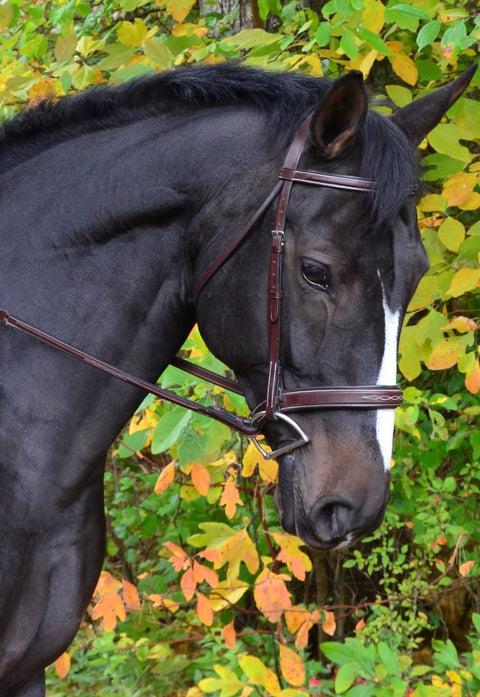 KL Tyron Hunter Bridle - Malvern Saddlery