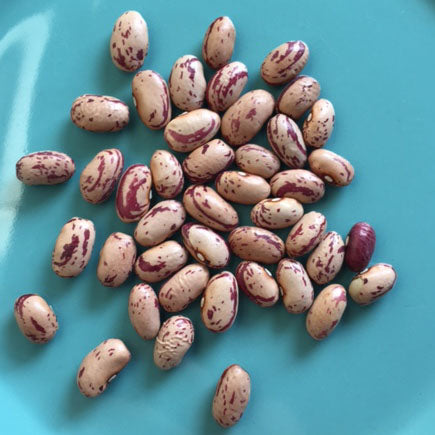 Cranberry Bean Seeds from Walnut Creek Gardens