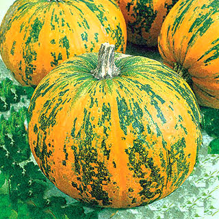 Pepitas Pumpkin Seeds, how to grow pepitas pumpkin