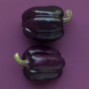 Pepper Purple Beauty