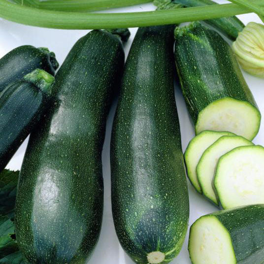 Squash - Zucchini Black Beauty