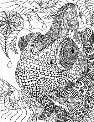 Coloring Book - 3rd Edition