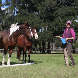 Karen Rohlf teaches you how to have a polite horse around food