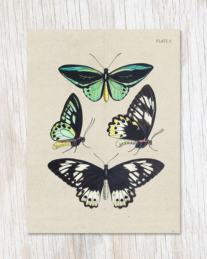 Butterfly Collection Specimen Plate 2 Greeting Card, HDG79