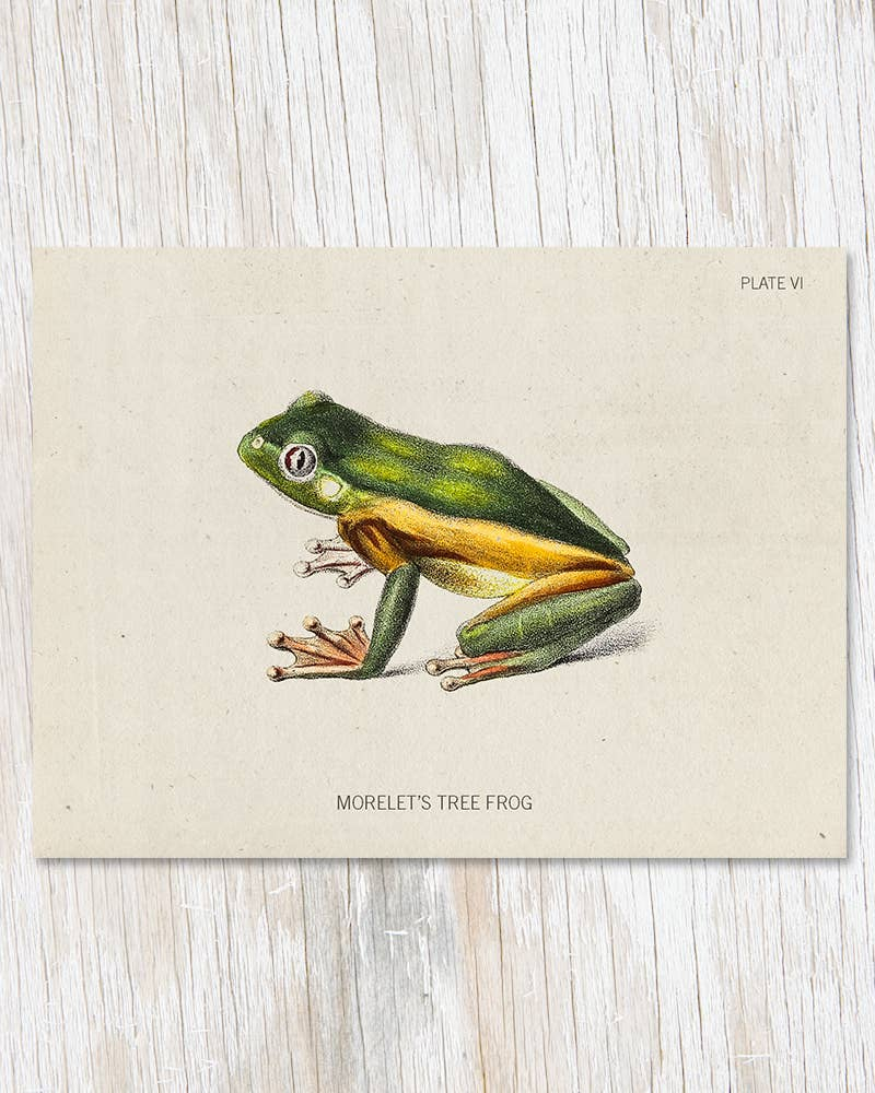 Tree Frog Greeting Card, HDG75