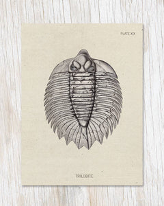 Trilobite Fossil Greeting Card, HDG83