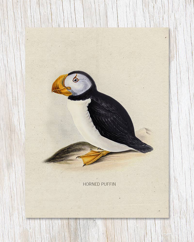 Horned Puffin Specimen Greeting Card, HDG74