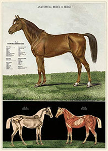 Horse Poster, HDG51