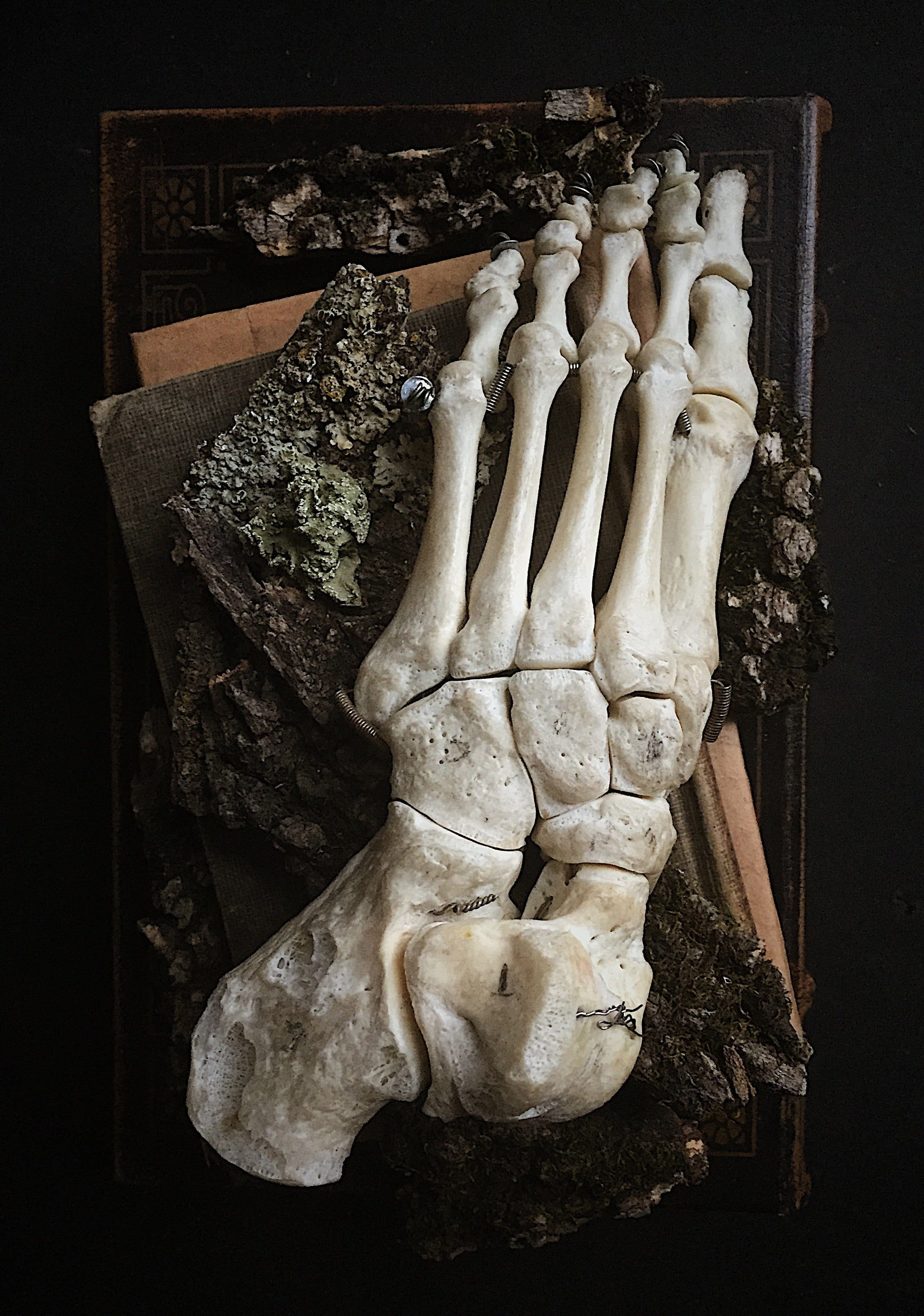 SB 34, Real Articulated Human Foot