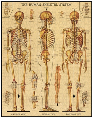 Skeletal System Puzzle, HDG181