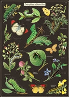 Caterpillar & Butterfly Poster, HDG252