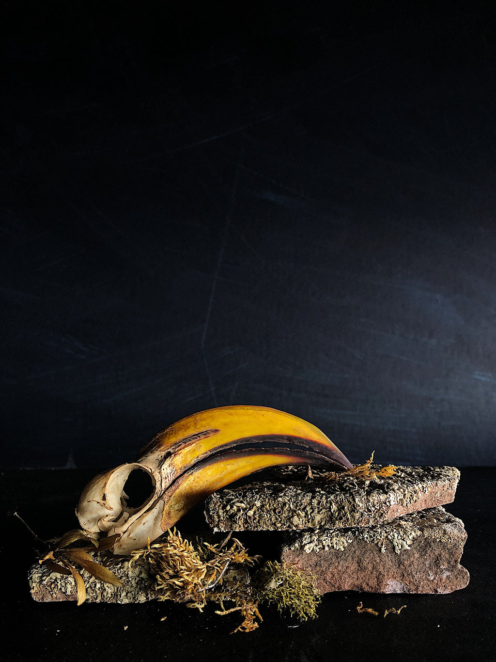 Eastern Yellow-Billed Hornbill Skull, SB105