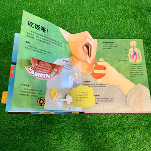 Human body pop up book 身体结构立体书.