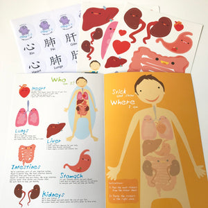 Looking Inside Your Body: Organ Stickers.