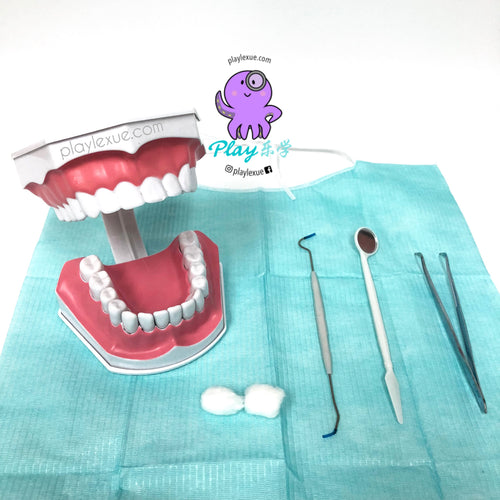 Teeth model and dentist tools set.