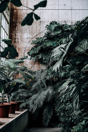 Air purifying plants, best plants for purifying the air, plants that kill toxins, good plants for the home, best plants for the home, meditation space, best plants for meditation space, awakened self, spiritual journey