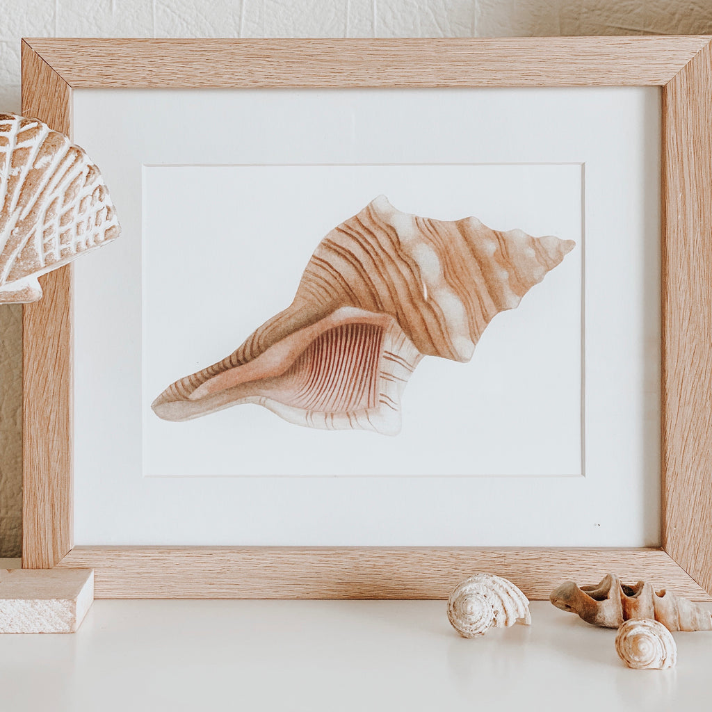 Horse Conch Shell Print