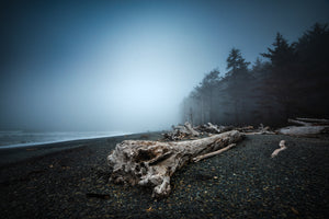 Moody-Misty-Foggy-Trees-Rialto-Beach-Olympic-National-Park-Washington-USA-Mark-Hannah-Photography