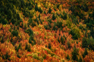 Arrowtown-Trees-Autumn-Colours-Mark-Hannah-Photography