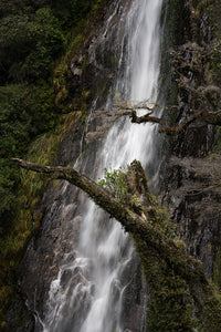 Thunder-Creek-Falls-Haast-New-Zealand-Tree-Branch-Mark-Hannah-Photography