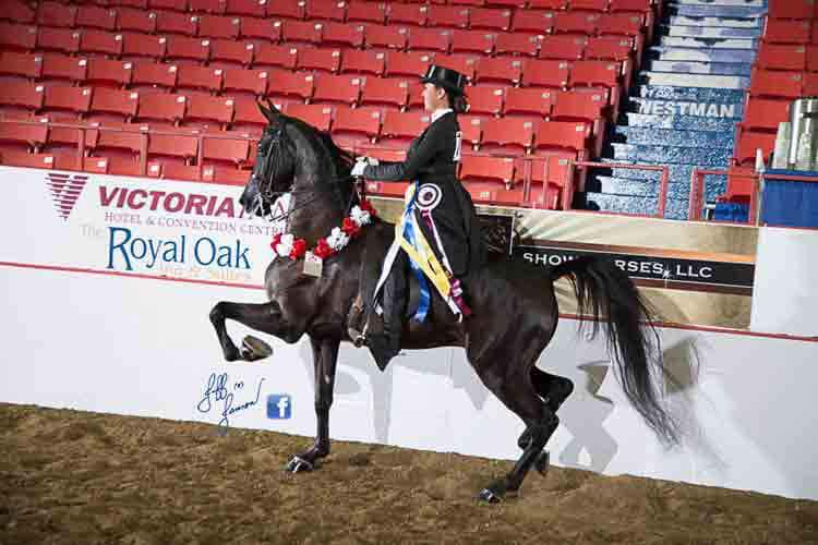 Online (Live-Streamed) Horse Shows