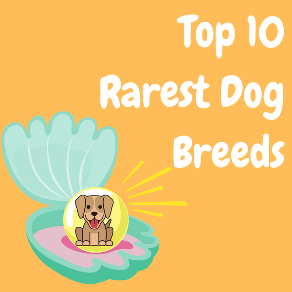 Top 10 Rarest Dog Breeds