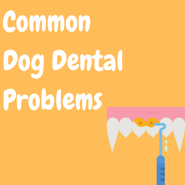 Common Dog Dental Problems
