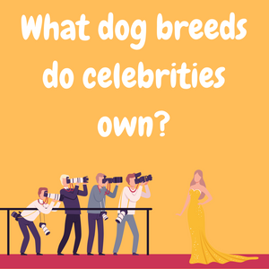 What Dog Breeds do Celebrities Own?