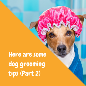 Here are some dog grooming tips part 2