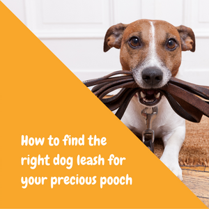 How to find the right dog leash for your precious pooch?