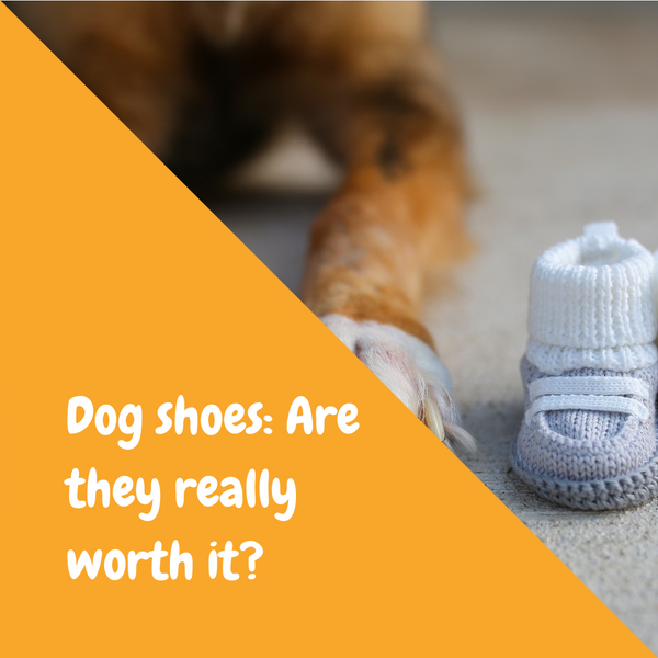 Dog shoes: Are they really worth it?