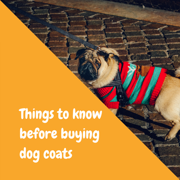 Things to know before buying dog coats