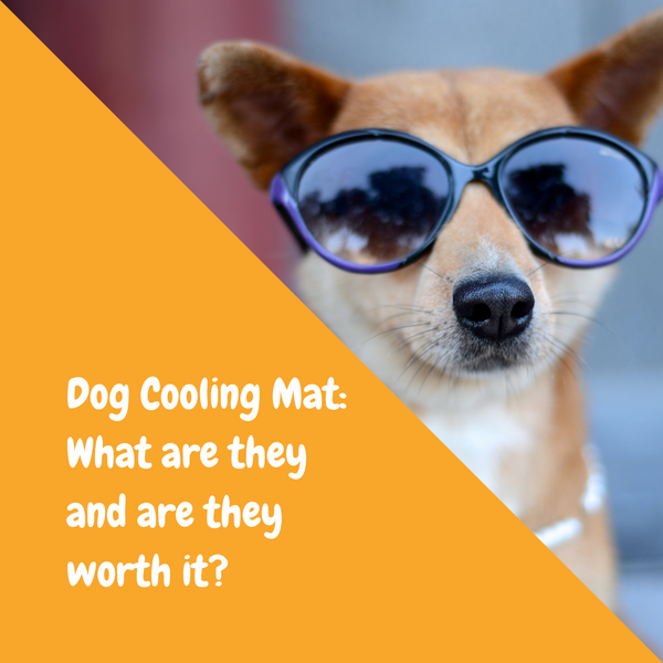 Dog Cooling Mats: What are they and are they worth it?