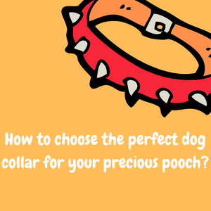 How to choose the perfect dog collar for your precious pooch?